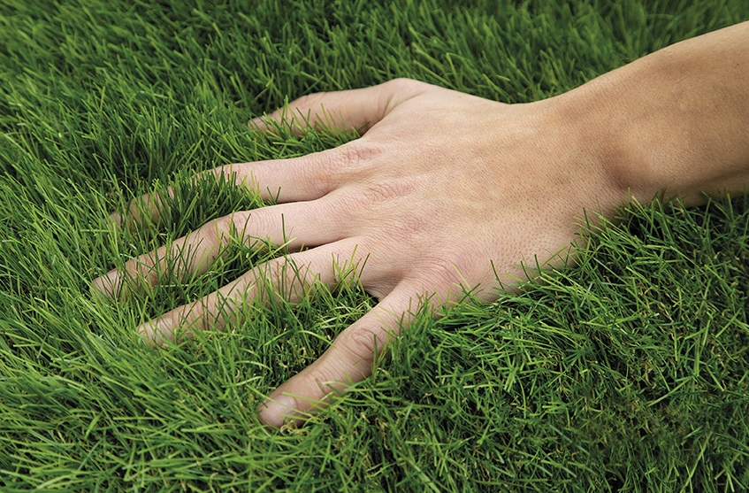 50179365-0-Fake-Grass-Synthetic